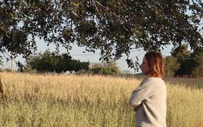 a bit of hay field