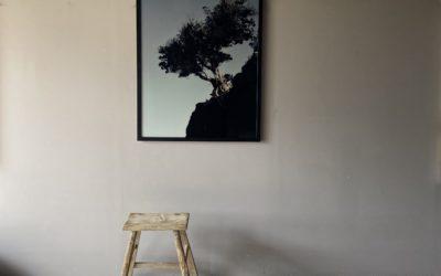 Sabina tree on the wall